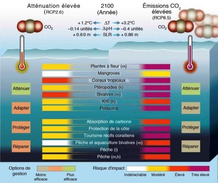 Les modifications physiques et chimiques de l'océan pourraient avoir un impact sur les organismes et les services écosystémiques selon deux scénarios : atténuation élevée (RCP2.6) et business-as-usual (c'est-à-dire si la situation perdure) (RCP8.5). Les changements de température (∆T) et de pH (acidité ; ∆pH) en 2090-2099 sont exprimés par rapport à la période préindustrielle (1870-1899). L'augmentation du niveau de la mer (SLR) en 2100 est exprimée par rapport à 1901. RCP2.6 est beaucoup plus favorable à l'océan même si plusieurs écosystèmes, biens et services restent très vulnérables. Ce scénario fournit également des options de gestion plus efficaces. Sur ce schéma, h, l et m correspondent respectivement aux latitudes hautes, moyennes et basses. © CNRS