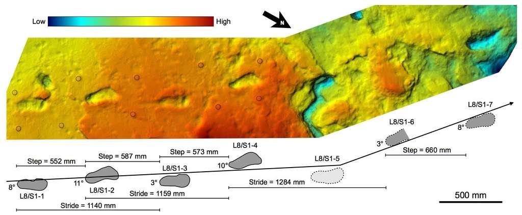 Mesures quantitatives sur les traces de S1. Ses enjambées étaient bien plus grandes que celles retrouvées ailleurs. © Fidelis Masao et al., eLife