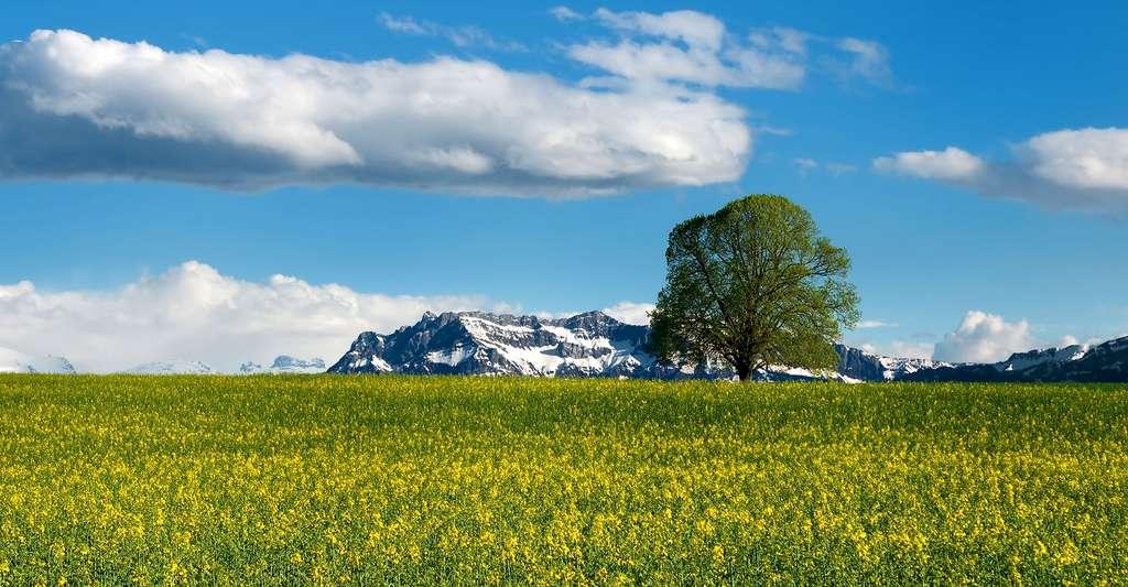 La biodiversité un vrai concept écologique. © Realworkhard, Pixabay, DP