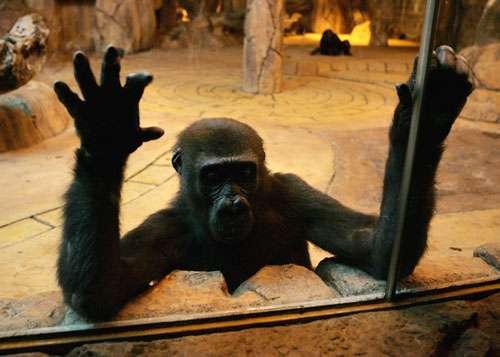 Jardins zoologiques nationaux de Pretoria, Afrique du Sud © IFAW