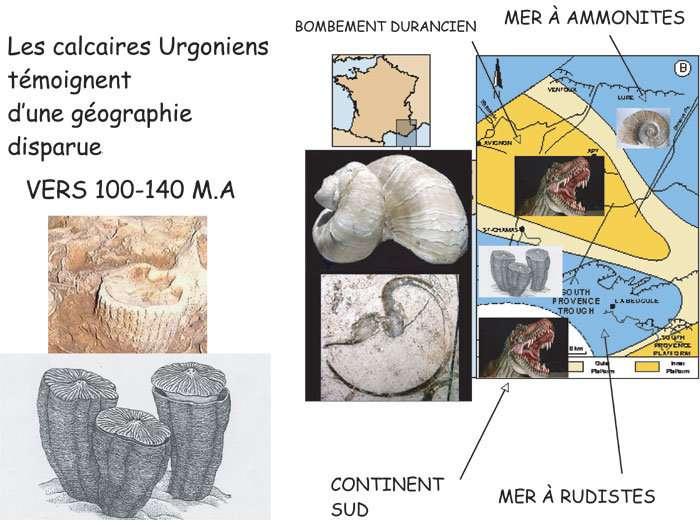Figure 8. Les rudistes, démantelés, sont à l'origine des calcaires de la côte. © J. Collina-Girard