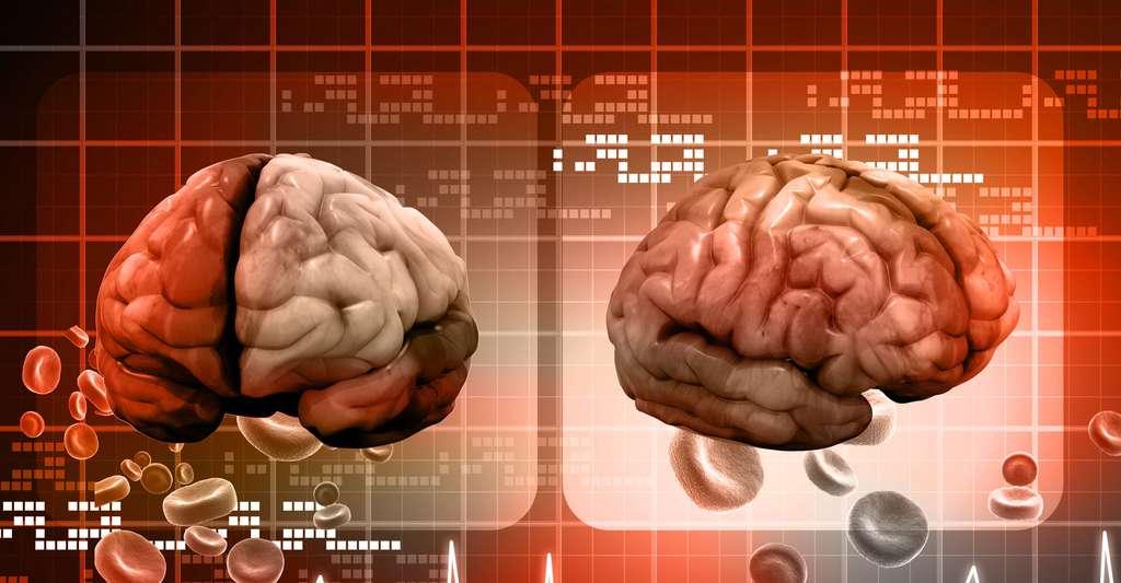 Le cortex est un réseau très dense. © Ramcreations, Shutterstock