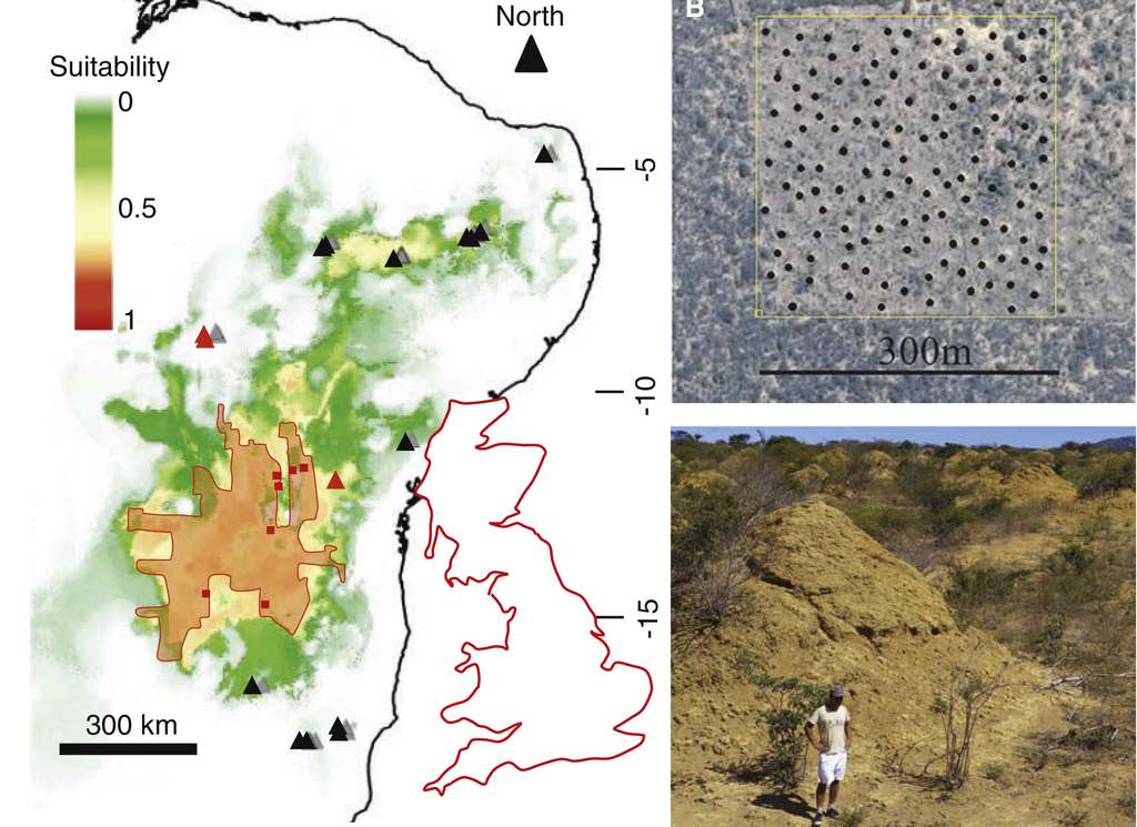 La termitière occupe plus de 230.000 km2, une surface équivalente à celle de la Grande-Bretagne. © Roy Funch