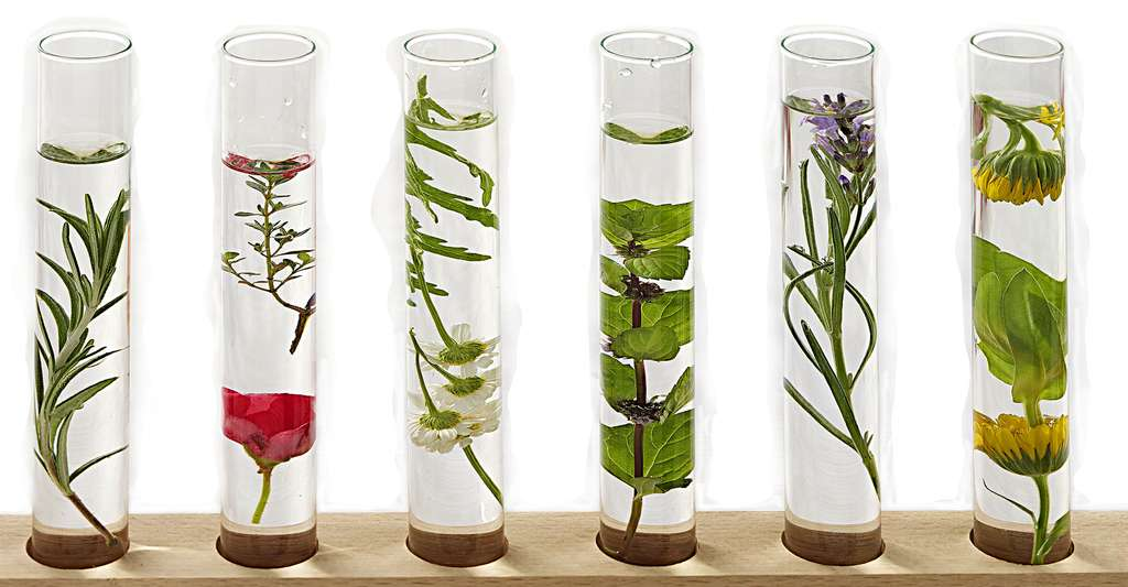 Les biotechnologies sont utilisées dans le domaine des cosmétiques. Elles s'inspirent notamment du végétal. © JPC-PROD, Shutterstock
