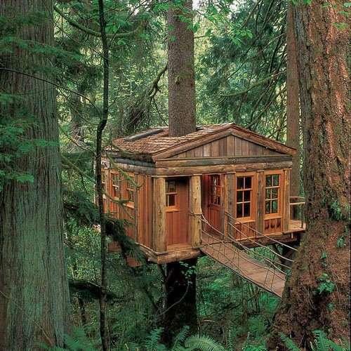 Un cabane dans les arbres !