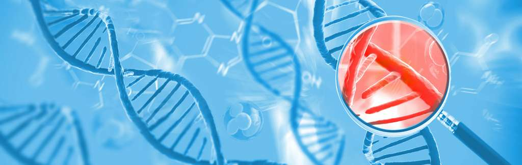 Seule une petite partie de notre ADN est unique à Homo sapiens. © Giovanni Cancemi, Adobe Stock