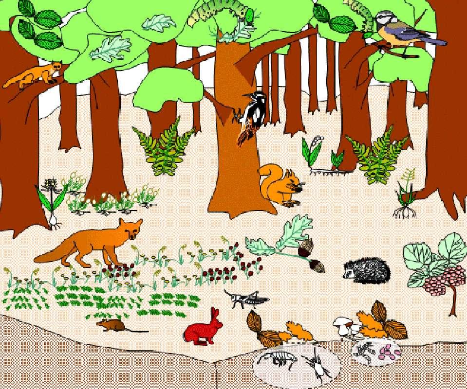 Écosystème de la forêt. © SVT Estaing