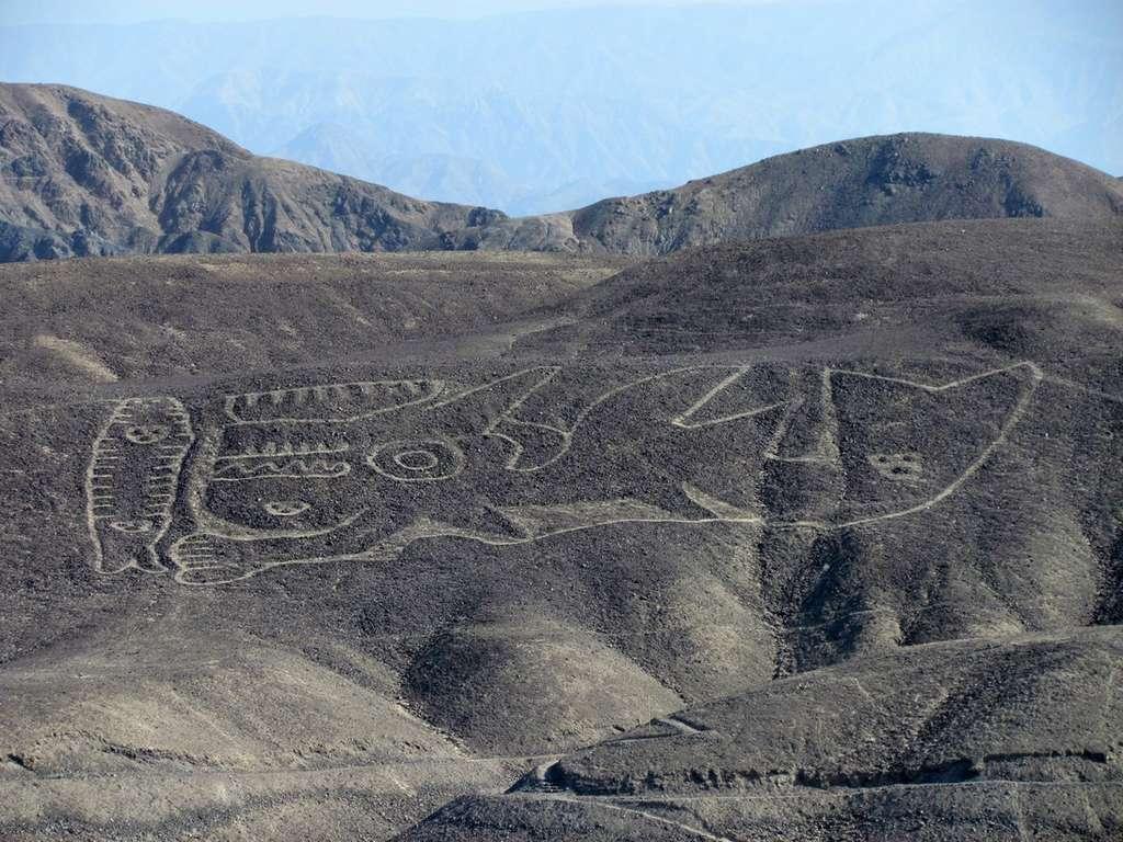 Redécouvert en novembre 2017, un grand géoglyphe représentant une orque et daté d'environ 2.000 ans. © Johny Isla Cuadrado, Peruvian Ministry of Culture, German Archaeological Institute