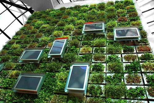 Le mur végétalisé, grande tendance 2011 de la décoration intérieure. © Citizen, Flickr, CC by nc-sa 2.0