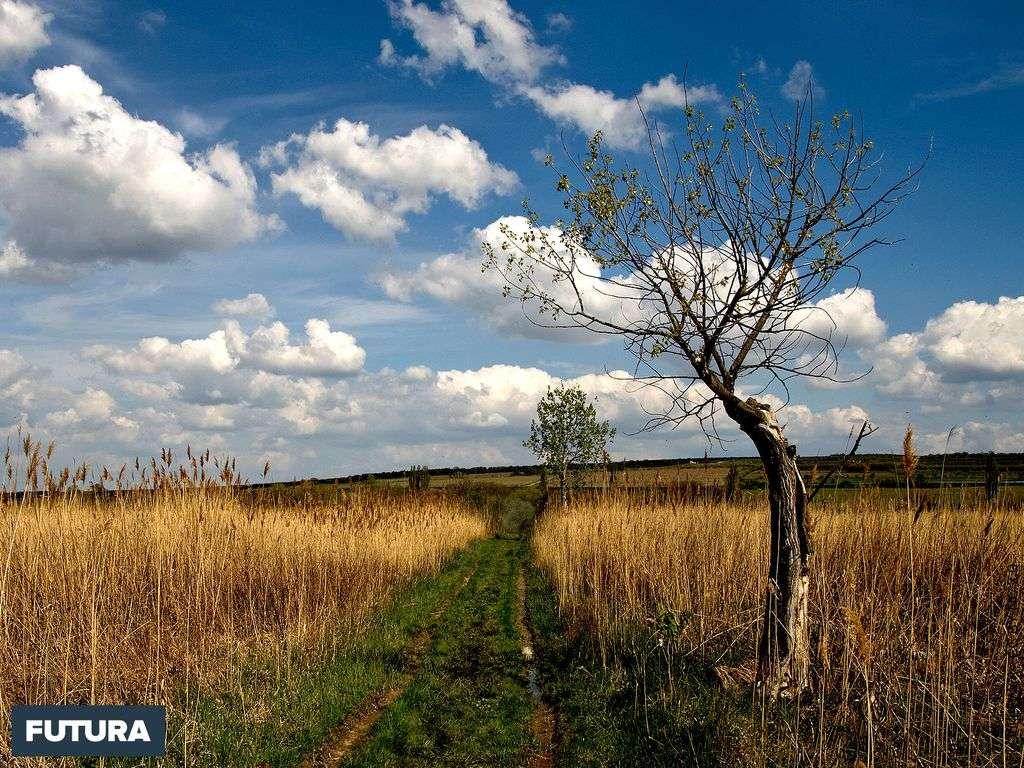 Dans la campagne hongroise