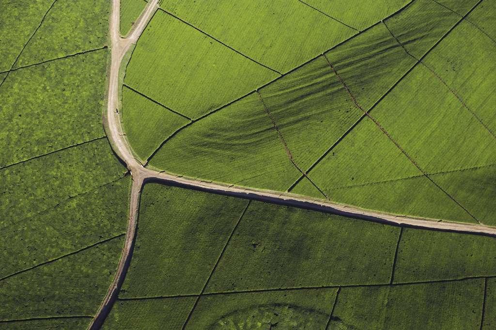 Vue aérienne d'une plantation de thé