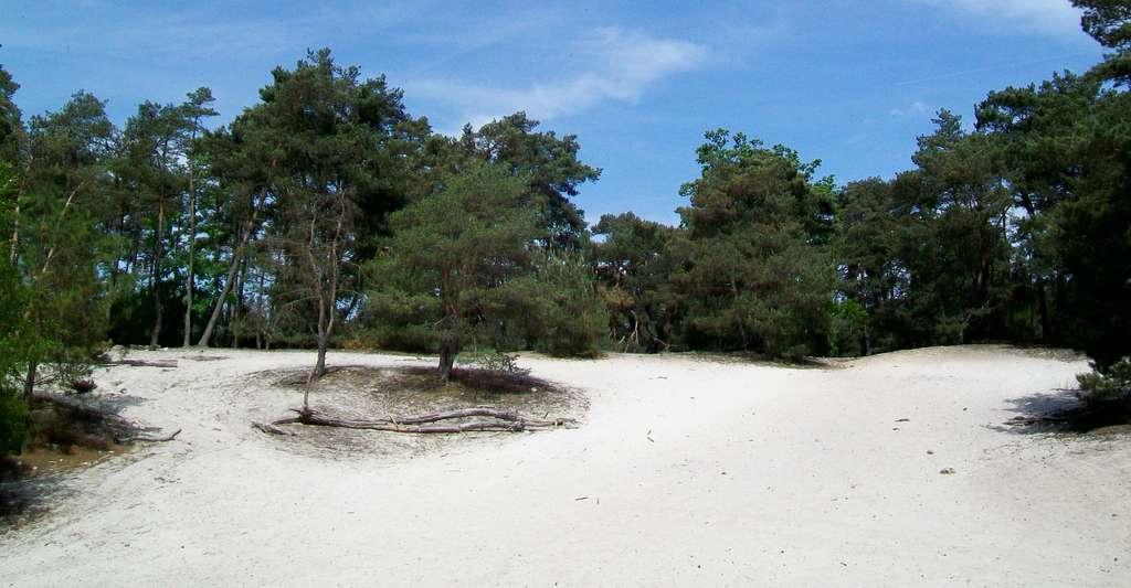 La butte aux Gens d'Armes dans la forêt de Pontarmé. © P.Poschadel, Wikimedia commons, CC by-sa 2.0 FR