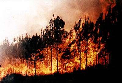 La faune et la flore subissent de plein fouet l'impact d'un feu de forêt, les sapeurs-pompiers se retrouvent aussi en première ligne.
