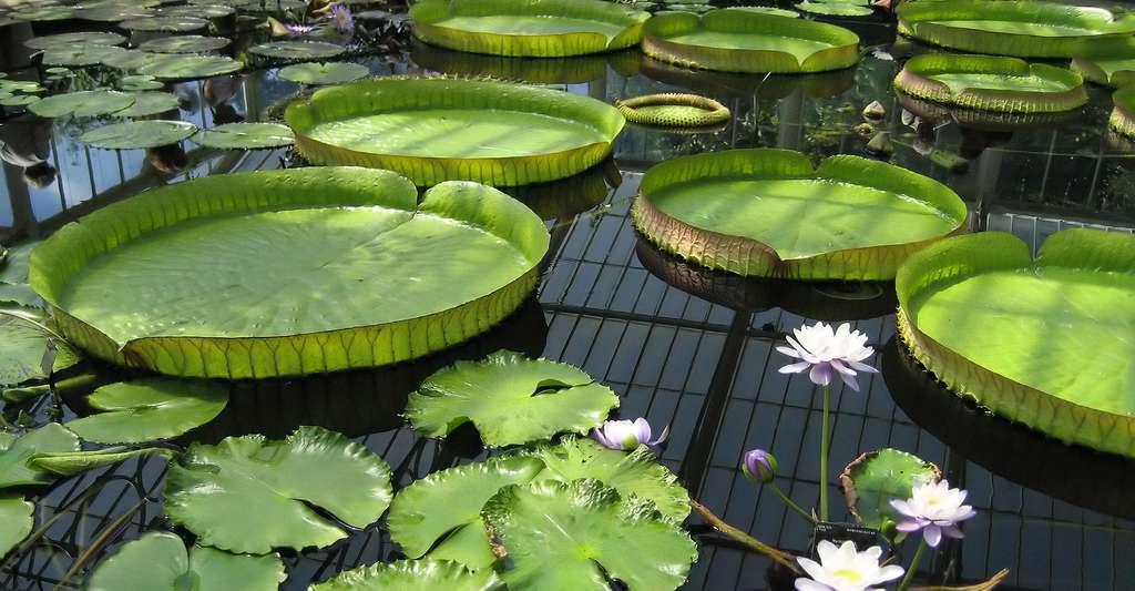 Maintenir une eau de bassin limpide et pure | Dossier