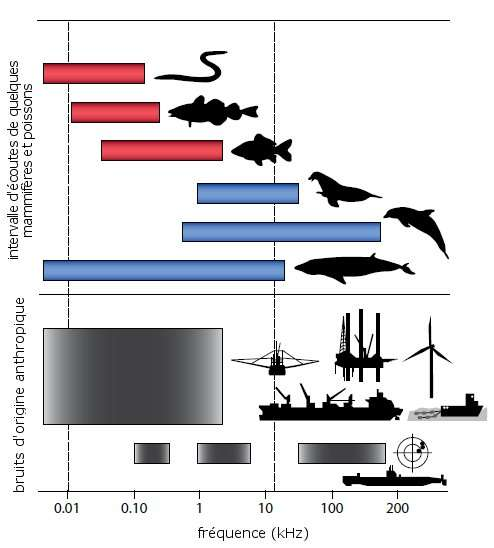 Les bruits d'origine anthropique sont émis sur les mêmes fréquences que les sons des animaux utilisés pour la communication. © The Oceaonography Society, d'après Slabberkoorn et al. 2010, Elsevier - adaptation Futura-Sciences