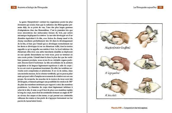 Planche n°2 : anatomie des différentes espèces de rhinogrades