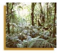 Les réserves de biosphère ont des effets bénéfiques inestimables ; elles contribuent par exemple à reconstituer l'oxygène atmosphérique, à protéger les sols de l'érosion et à régulariser le débit des fleuves. La Réserve de biosphère de Mata Atlântica couvre ce qui reste des zones boisées de la chaîne montagneuse qui s'étend le long de la côte Atlantique du Brésil sur 3000 km. L'un de ses principaux avantages est qu'elle fournit un approvisionnement régulier en eau propre aux nombreuses villes de la côte, notamment aux mégalopoles de Rio de Janeiro et São Paulo. Copyright Photo: Roberto Linsker.