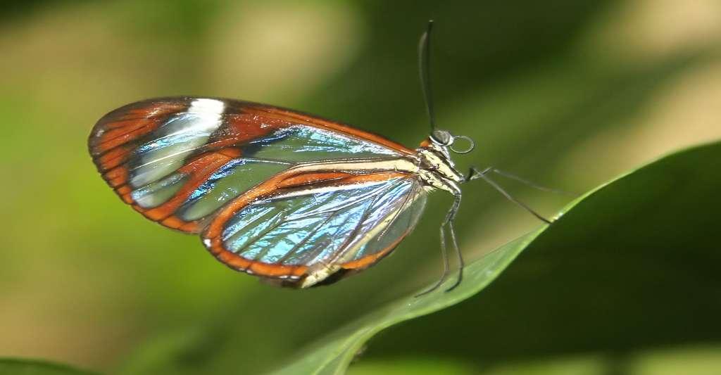 L'élégance d'un papillon. © Eric Valenne, Shutterstock