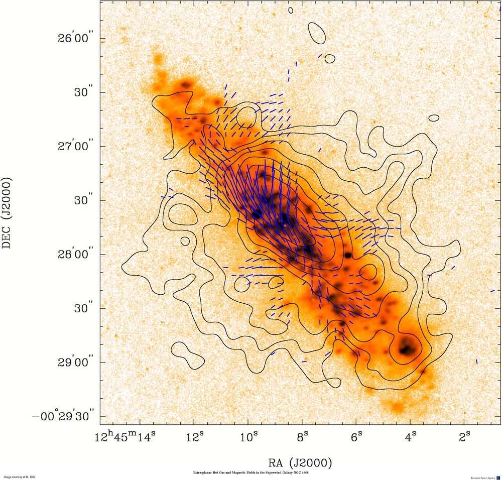 Sur cette image, les tirets bleus indiquent la dispersion des vents de gaz chauds issus du cœur agité de la galaxie NGC 4666, tels que les observe XMM-Newton. Les courbes autour de la galaxie correspondent à différents niveaux d'intensité du champ magnétique mesuré avec le radiotélescope VLA (Very Large Array). Crédit Esa/M. Ehle