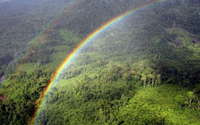 Avec le réchauffement climatique, les forêts tropicales pourraient relâcher du carbone plutôt que de le stocker. © AFP archives