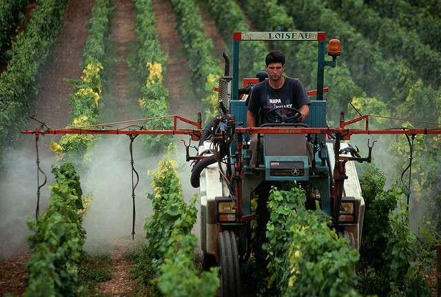 Pulvérisation de pesticides sur une vigne, dans la Nappa Valley, en Californie. © tpmartin, Flickr, cc by nc sa 2.0