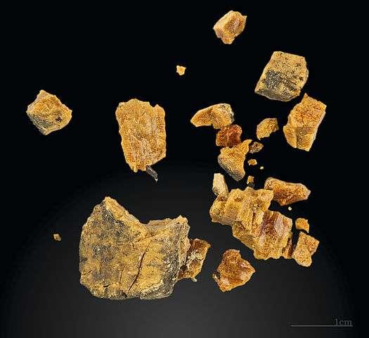 Fragments d'ambre découverts dans un site préhistorique en Espagne, grotte d'Altamira (Solutréen), Muséum de Toulouse. © Didier Descouens, Wikimedia commons, CC by-sa 4.0