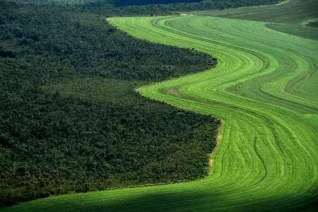 Vue aérienne de champs cultivés à la lisière de la savane Cerrado, le 14 juin 2019 à Formosa de Rio Preto, au Brésil. © Nelson Almeida, AFP Archives