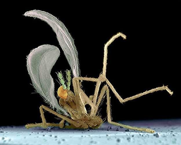 Un insecte écrasé sur un pare-brise