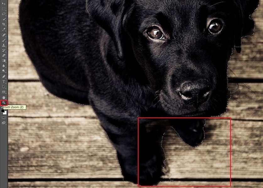 Zoomez ou dézoomez à votre convenance pour détourer de manière optimale. © Adobe