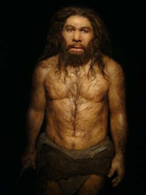 Les Néandertaliens ont vécu sur une période de 300.000 ans et ont fini par s'éteindre peu après avoir rencontré les Hommes modernes. Mais leur déclin avait commencé déjà avant la rencontre. © Fuzzyraptor, Flickr, cc by nc sa 2.0