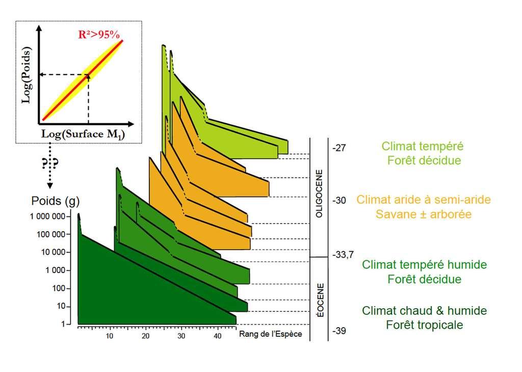 Les cénogrammes successifs d'une région montrent une adaptation aux différents climats. © Gilles Escarguel, Jean-Louis Hartenberger