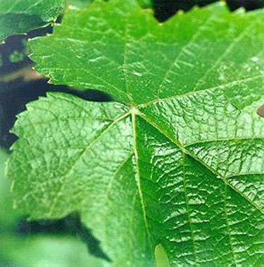 La Bourgogne est l'une des principales régions viticoles françaises.