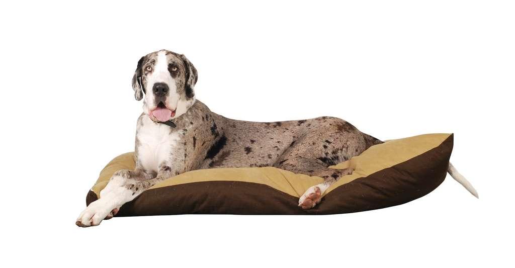 Le dogue allemand est l'un des chiens dont l'espérance de vie est la plus faible (8 ans). © sheddon0, Pixabay, DP