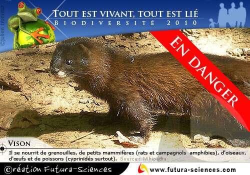 L'UICN publie une liste rouge des espèces menacées, pour attester du danger qui pèse sur la biodiversité. © Futura-Sciences
