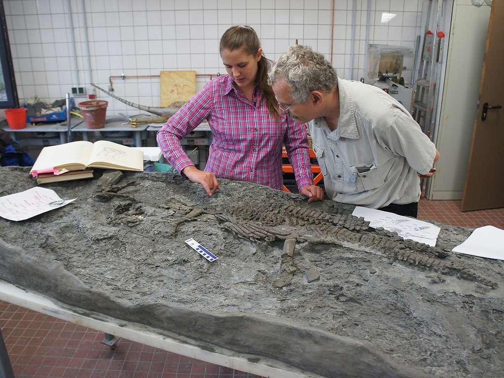 Les paléontologues Tanja Wintrich et Martin Sander examinant le fossile de Rhaeticosaurus mertensi, découvert en 2013 par un particulier en Westphalie (Allemagne). © Yasuhisa Nakajima