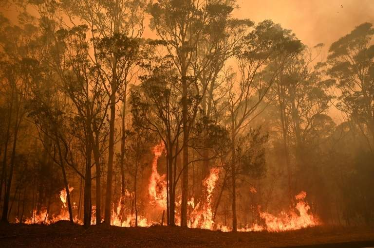 Un feu de forêt près de la ville de Moruya, en Nouvelle-Galles-du-Sud, le 4 janvier 2020 en Australie. © Peter Parks, AFP, Archives