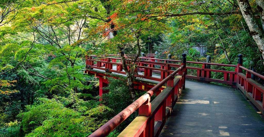 Jardin japonais. © Shell Ghostcage, CCO