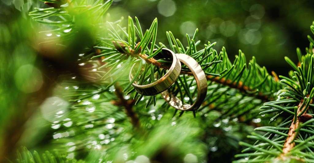 Le mariage rend plus heureux ? © Bondvit, Shutterstock