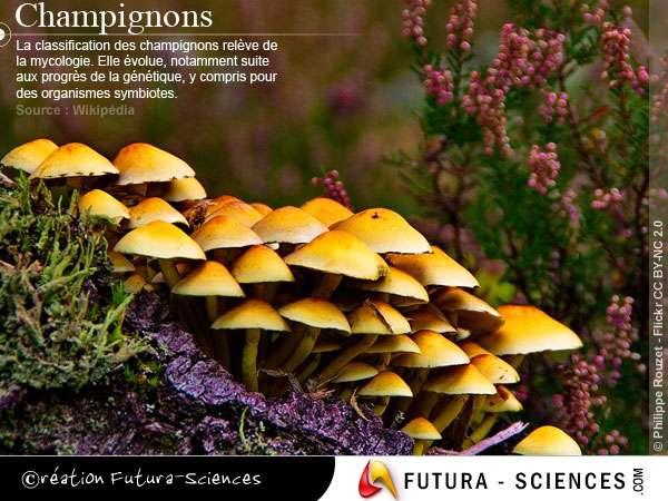 Automne : Ceuillette des champignons