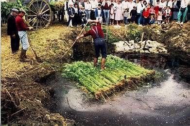 Rouissage du chanvre dans la Sarthe. © Photo Epopée du chanvre - Sauvegarde des fours à chanvre