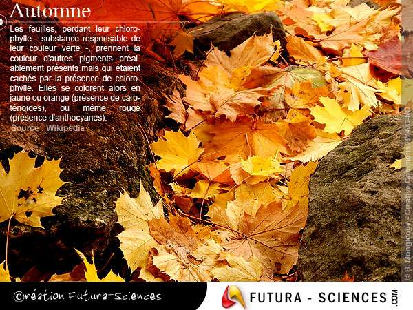 Automne, feuilles mortes