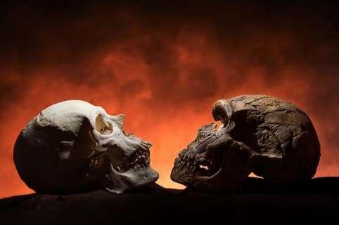 À gauche, un crâne d'Homme moderne (Homo sapiens), avec menton, et, à droite, un crâne d'Homme de Néandertal (cousin d'Homo sapiens), sans menton. © Tom Schoon, université de l'Iowa