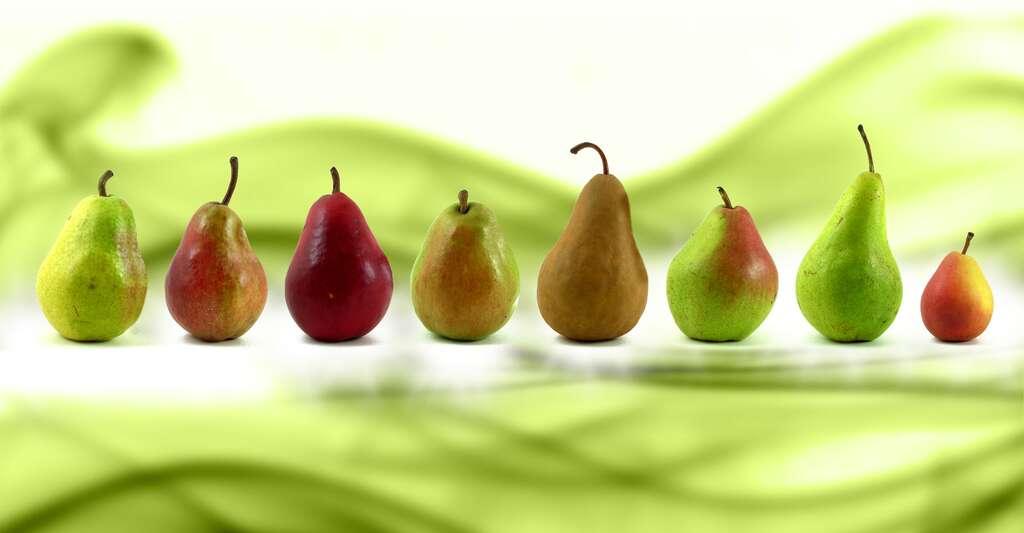Différentes variétés de poires. De gauche à droite : Williams, Louise-Bonne, Red Williams, Anjou, Bosc (bio), Comice, Concorde, Seckel. © Agyle, Wikimedia Commons, DP