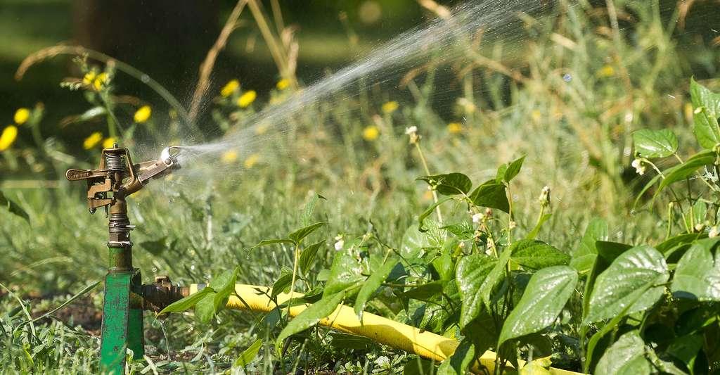 L'arrosage automatique permet de réguler sa consommation d'eau. © PierreSelim, CC by 3.0