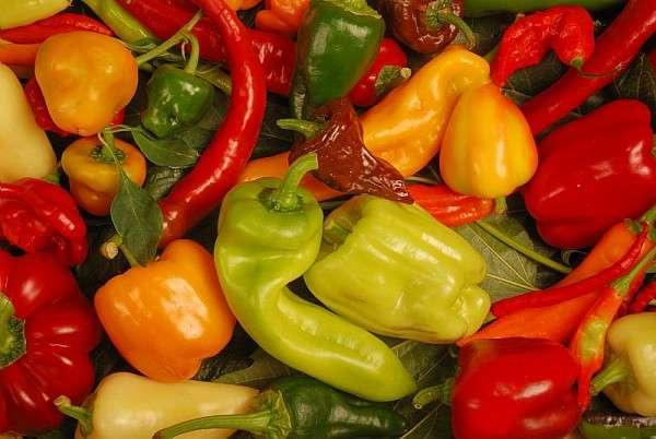 Les variétés de piments et poivrons