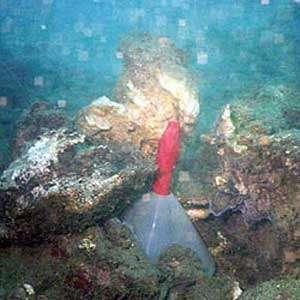 Prélèvement sous-marin de fluides géothermaux dans la baie de Bouillante (Guadeloupe). © BRGM