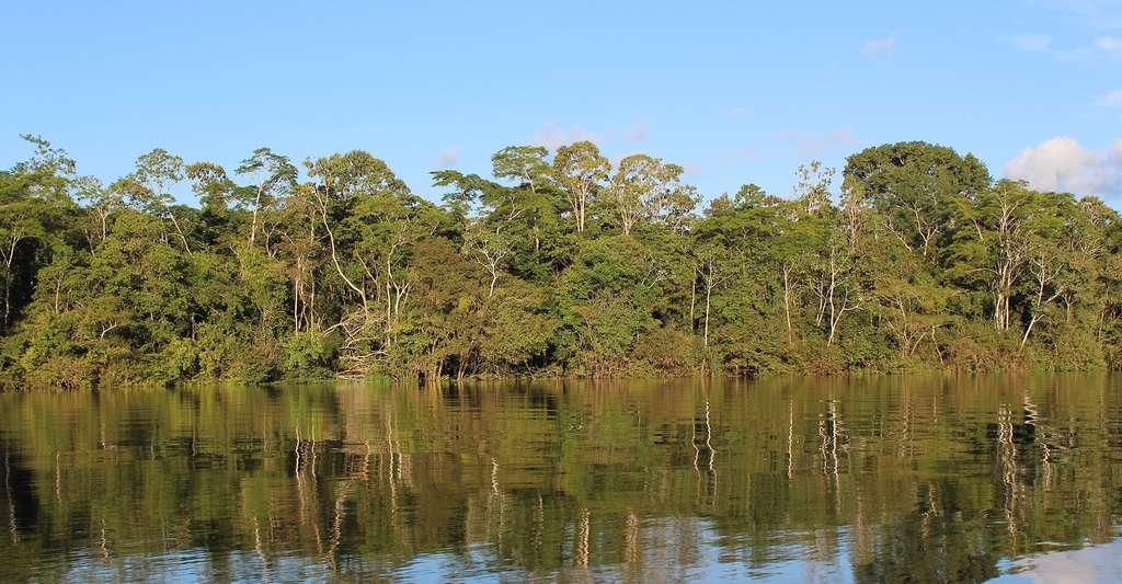 Forêt amazonienne. © Antonio Campoy, Wikimedia commons, CC by 2.0