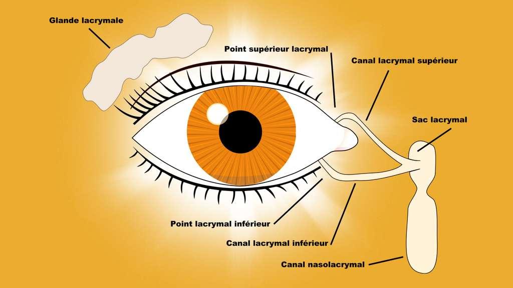 Le système lacrymal