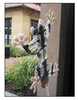 Le robot Stickybot imite les propriétés naturelles du gecko. © Kellar Autumn, Lewis & Clark College, Portland