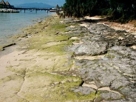 Grès de plage à l'îlot Maître dans le lagon calédonien. © Jean-Michel Lebigre - Tous droits de reproduction interdit